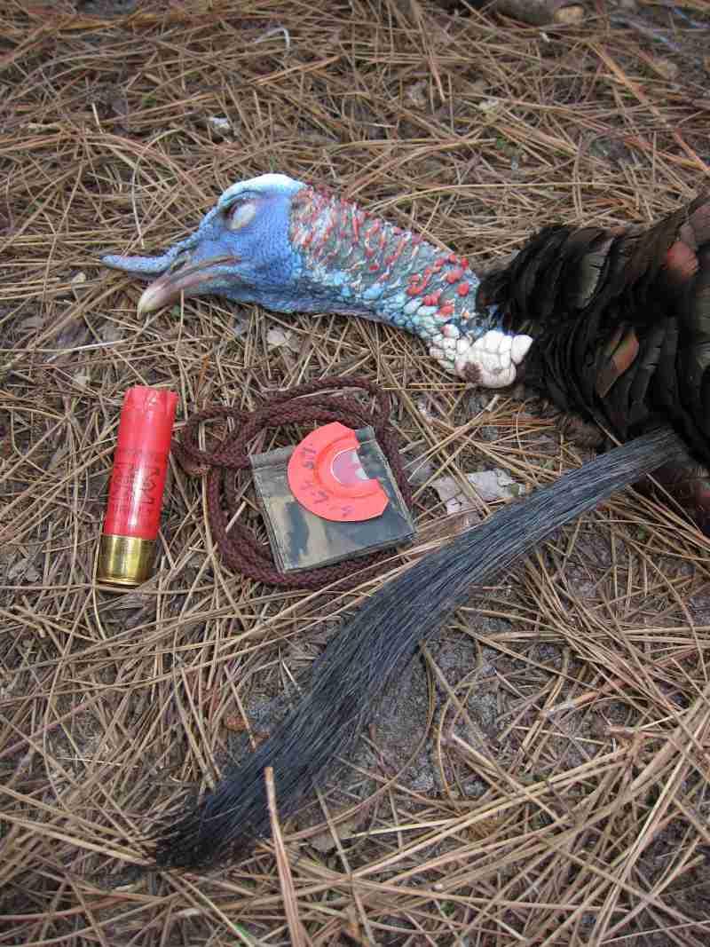 florida turkey hunting